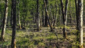 The forest in April