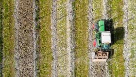 Arbeiten im Weinberg - Works in the Vineyard