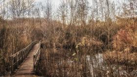 Brücke im Gestrüpp - Bridge in the undergrowth