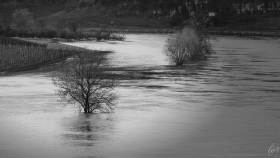 Hochwasser an der Mosel - Flooding on the Moselle River