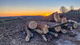Baumstämme - Tree trunks
