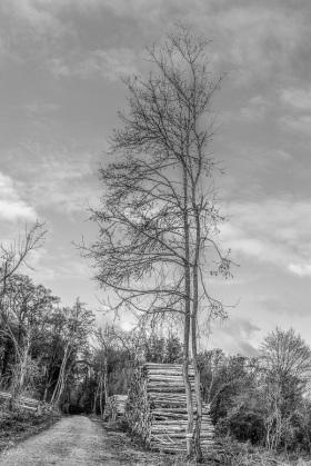 Aufrechter Baum - Upright tree