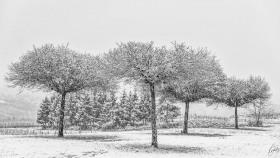 Schneeschauer - Snowshower (1)