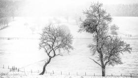 Schneeschauer - Snowshower (3)