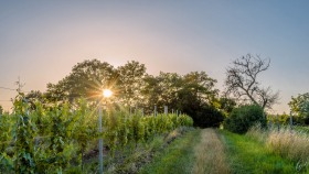 Sonne hinter Bäumen - Sun behind trees