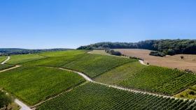 Weinberg bei Greiweldingen - Vineyard near Greiveldange
