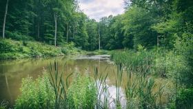 Weiher - Pond