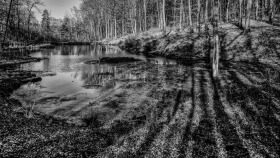 Natur in Schwarzweiss - Nature in Black and White