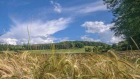 Landschaft bei Stadtbredimus - Landscape near Stadtbredimus