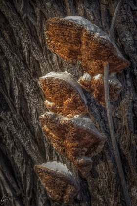 Mushrooms on a tree
