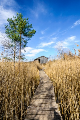 Der Pfad - The path
