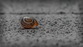 Schneckenhaus - Shell