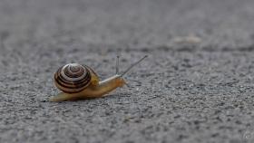 Schnecke / Slug