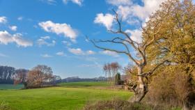 Toter Baum - Death tree