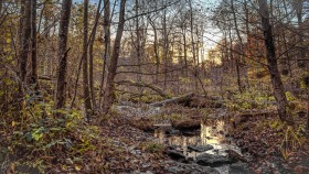 Sumpf - Swamp