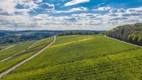 Weinberge bei Wormeldingen - Vineyards near Wormeldange