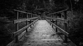 Steg am Weiher - Jetty at the Pond