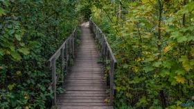 Holzbrücke - Wooden Bridge